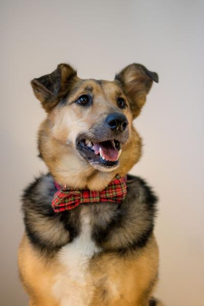 Dog Collar with Bow Tie - Tartan