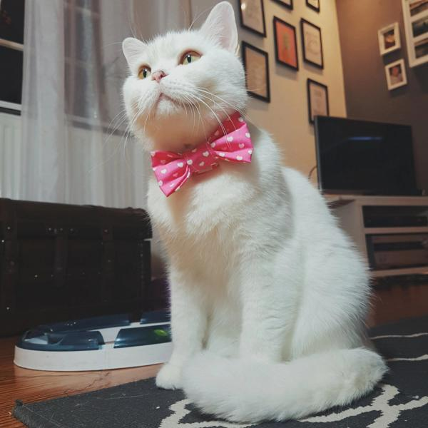Cat Collar With Bow Tie - Hearts - Pink